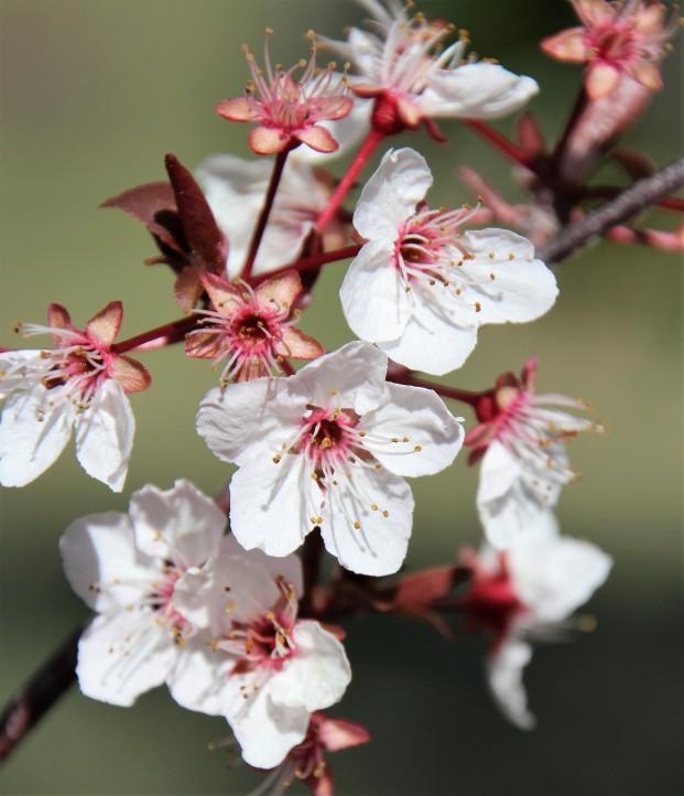 Spring blossoms...