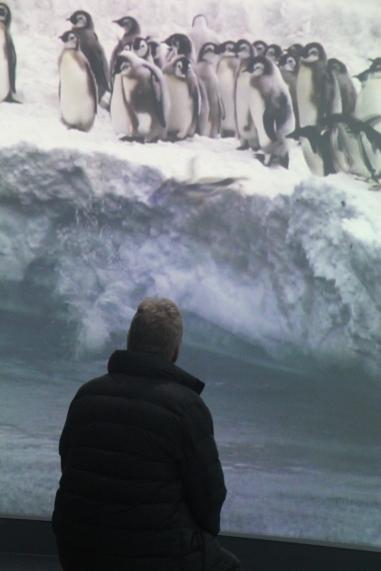 Penguin watching