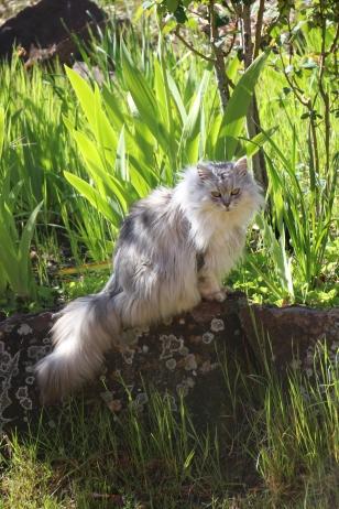 Friskie my gardening companion.
