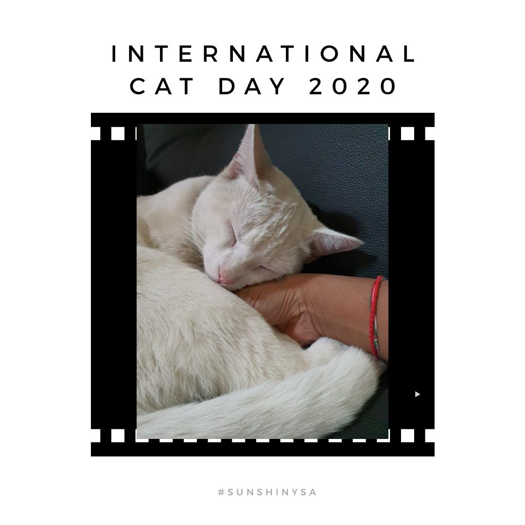 International Cat Day ishere!